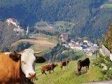 Bergbauernhof Urlaub